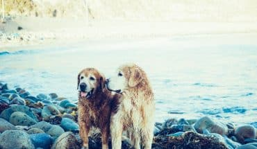 camping with dogs - dog friendly camping
